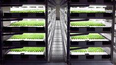 This Robot-Run Indoor Farm Can Grow 10 Million Heads Of Lettuce A Year -------  This massive Japanese vegetable factory saves water and energy—along with human labor.