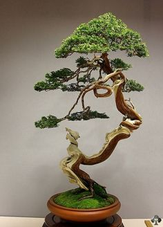 MUST FIGURE OUT HOW TO GET INTO BONSAI WITHOUT GOING BROKE OR KILLING THE PLANTS!  Juniper Bonsai by Jose Luis Blasco Paz