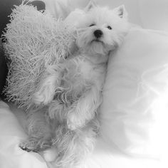 Guess who's getting breakfast in bed this morning? by emma_the_westie
