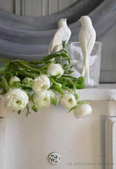 Ranunculus white.