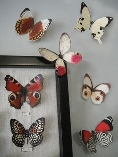 Hey, I found this really awesome Etsy listing at https://www.etsy.com/listing/95995232/paper-butterflies
