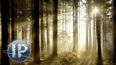 Adobe Photoshop Elements Sun Ray Effect Photoshop Elements Tutorial for PE10 PE11 and PE12. In this tutorial Infopuppet shows you two amazing techniques on h...