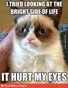 Grumpy Cat Strikes Again!