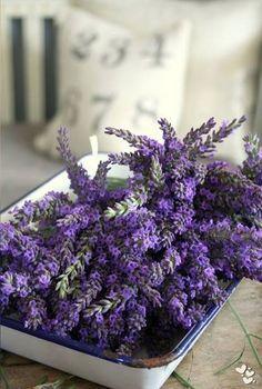 a lavender cottage . X ღɱɧღ Lavender Cottage, Lavender Green, French Lavender, Lavender Fields, Lavender Flowers, Purple Flowers, Beautiful Flowers, Lavender Oil, Lavenders Blue Dilly Dilly