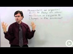 Science Help at Brightstorm! http://brightstorm.com/science The definition and importance of homeostasis.