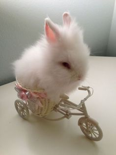 This is the cutest bunny photo I think I've seen! There is a Cute and fuzzy little bunny on a BIKE!!! And With a pink flower ribbon!!!!! Bunnies rock. #sosoft