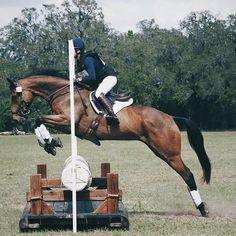 @hunterjumperqueen || pinterest's equestrian queen