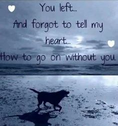 Losing a pet quotes cat so true ideas I Love Dogs, Puppy Love, Der Boxer, Pet Loss Grief, Dog Poems, Pet Remembrance, Rainbow Bridge, Pet Memorials, Animal Quotes