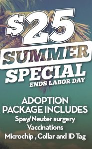 If you're thinking about adding another member to your family, summer is a great time to adopt. Animal Adoption   AustinTexas.gov