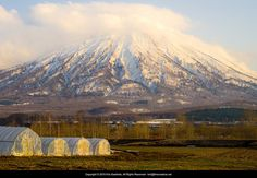 Greenhouses and Mt Yotei