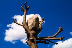Penone Tree by Thomas Risse on 500px