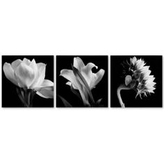 Modern Floral Canvas Triptych by Michael Harrison