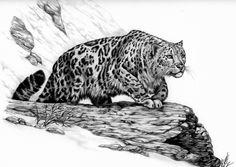 Snow Leopard Drawings   Traditional Art / Drawings / Animals ©2003-2013 ` AthenaTT