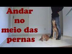 Como ensinar seu cachorro a andar no meio de suas pernas - Adestramento ...