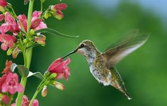 Add these to your landscape to help welcome the tiniest of feathered friends.