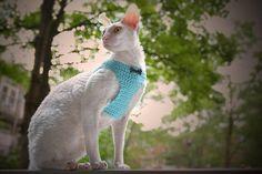 Crochet skye blue pet harness and leash set Handmade cat