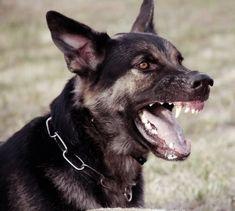 New dogs aesthetic dark Ideas 3d Max Tutorial, Scary Dogs, Diy Dog Collar, Ju Jitsu, Dog Teeth, Dog Paintings, Family Dogs, Samoyed, Dog Quotes