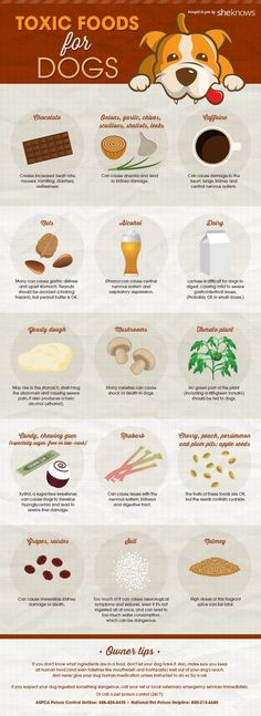 This handy infographic shows you what foods you should NEVER feed Fido