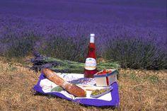 France    Lavender Field Picnic