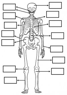 22 Fichas primaria con ejercicios de ciencias naturales Biology Lessons, Science Biology, Science For Kids, Science And Nature, Digestive System For Kids, Human Skeleton Anatomy, Interactive Poster, Human Body Systems, Medical Anatomy