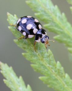 Love this one, it reminds me of a favorite shirt!. A Ladybug from...Stockholm, Sweden