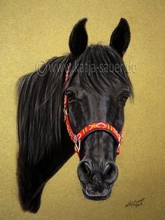 Araber - Pferdezeichnungen und Pferdeportraits in Pastellkreide - Tierzeichnungen und Tierportraits von Katja Sauer / Horse drawings and horse portraits in soft pastels - Animal paintings and animal portraits by Katja Sauer