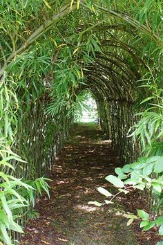 Oh wow!  Living willow tunnel... I would love one of these in the backyard, or at a natural park!?