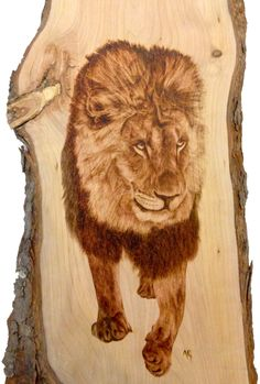 Captivated Lion on Cherry - Pyrography by Alexandra Glueckler