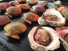 ヒオウギ貝 カラフルな貝これはホタテの味わいのヒオウギ貝 殻は装飾品にも使われるそうです 岩牡蠣も美味しかったです() tags[大分県]