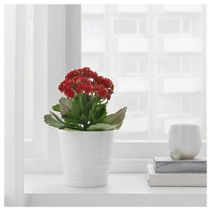 IKEA - MUSKOT, Plant pot, white, Decorate your home with plants combined with a plant pot to suit your style. May be combined with the other plant pots in the MUSKOT series. Best Potted Plants, Indoor Plant Pots, Cactus Plants, Indoor Plants Online, Ikea Ps 2014, Outside Plants, Decoration Plante, White Plants, Kallax