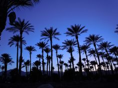 A short drive to the desert will cure any lurking winter blues!  Palm Springs is the perfect weekend getaway for the whole family where resorts, activities, food and fun await to cater to your every whim.