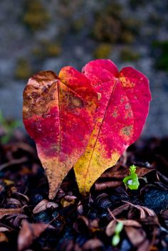 """Life wisdom in a leaf. """"Let's grow old together"""""""