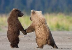 These two seven-month-old cubs thought that holding hands would make the danger disappear