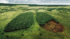 Norway Is The First Country To Ban Deforestation . The Norwegian Parliament pledged May 26 that the government's public procurement policy will be deforestation-free. https://ecowatch.com/2016/06/08/norway-bans-deforestation/ _ _ _Deutsch:   Norwegen ist das 1. Land das die Abholzung der Regenwälder verbieten will . Norwegens Regierung will eine Selbstverpflichtung zum Schutz des Regenwaldes einführen…