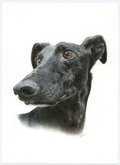 Galgo español, Greyhound, Ilustración, Lápiz, Pencil, Crayon, Grafito, Caran d'Ache. Dog portrait Moose Art, Dogs, Animals, Greyhounds, Graphite, Animales, Animaux, Doggies, Animais