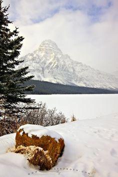 Mount Chephren Waterfowl Lake Winter Picture