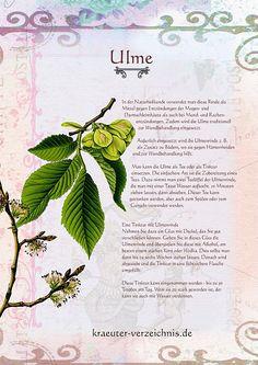 Die Ulme