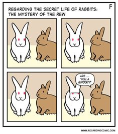 I wonder if this is what Marvin thinks of Franky. Funny Animal Jokes, Funny Animal Pictures, Funny Animals, Bunny Meme, Funny Bunnies, Pet Bunny Rabbits, Baby Bunnies, Rabbit Toys, Pet Rabbit