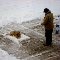 leave my snow blanket alone