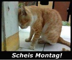 Montag...Scheisstag