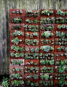 Wall of bricks with succulents