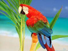 Image Result For Parrots Parrot Wallpaper Colorful Wallpaper Hd Wallpaper Live Wallpapers