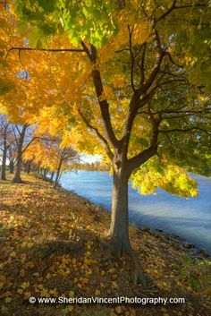 Autumn along the Genesee  at the University of Rochester, New York