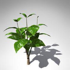 xfrogplants tree coffee tropical plant 3ds