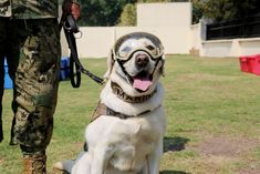 """""""She gives hope for life through her barks,"""" Frida's handler said. Mexico City Earthquake, Goofy Dog, Celebrity Dogs, Hope Symbol, Different Dogs, Rescue Dogs, Best Dogs, Fur Babies, Labrador Retriever"""