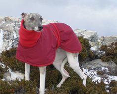 Hình ảnh từ http://www.bwdogcoats.com/images/red-whippet-dog-coat.jpg.