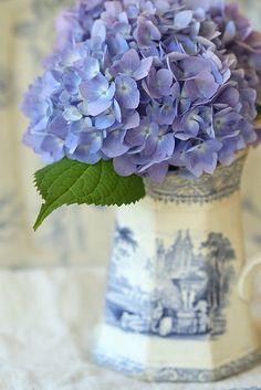 Blue hydrangea in blue and white transferware