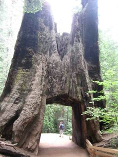 Ever seen a tunnel through a tree? Yosemite Natl. Park.