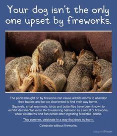 Yikes - I've been reading about how fireworks are bad for the environment and wild animals - as well as our domestic animals that get frightened...wondering why I never thought about this before. :/