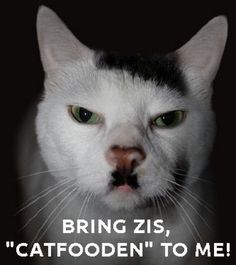 Funny Kitler Cat